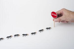 Combattre les fourmis dans la maison et dans le jardin